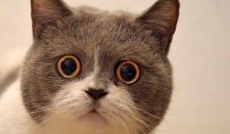 Dünya Kediler Günü Nedir? yazısının öne çıkarılan görseli